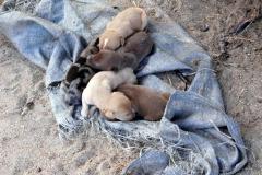 Čerstvě narozená štěňátka, Tamatave