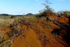 Písčitá půda, N.P. Ankarana