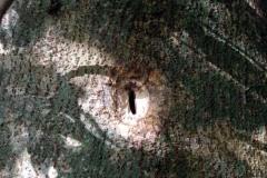 Otvor ve stromě vyhloubil ksukol prostředním prstem.
