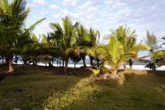 Kokosovníky na pláži v Tamatave