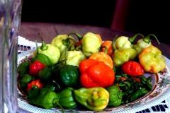 pálivé papriky a papričky pyripyr