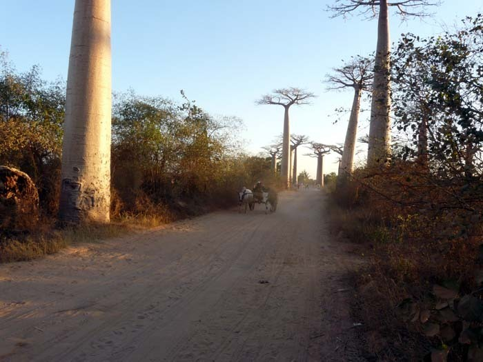 Aye-Aye expedition, Avenue de Baobab, Madagaskar