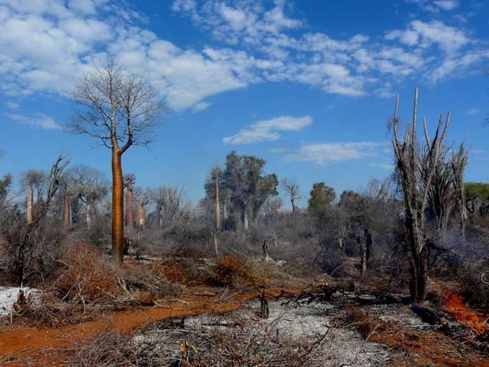 vypalování trnité buše, Ifata, Aye-Aye expedition, Madagaskar