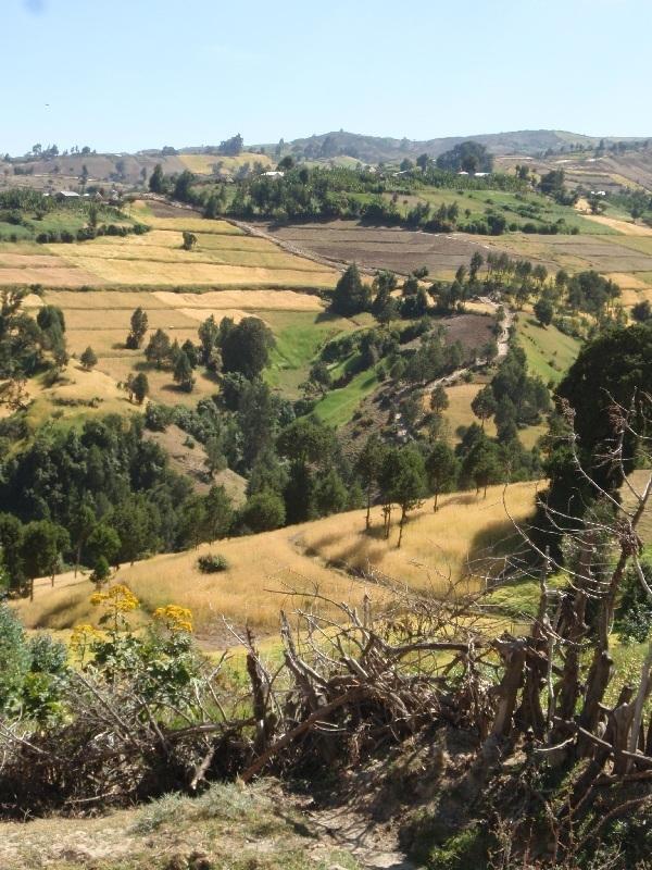 zemědělská krajina, Etiopie (foto: Víťa Glomb)