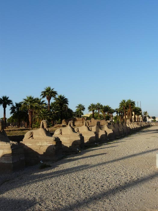 Luxor cesta sfing