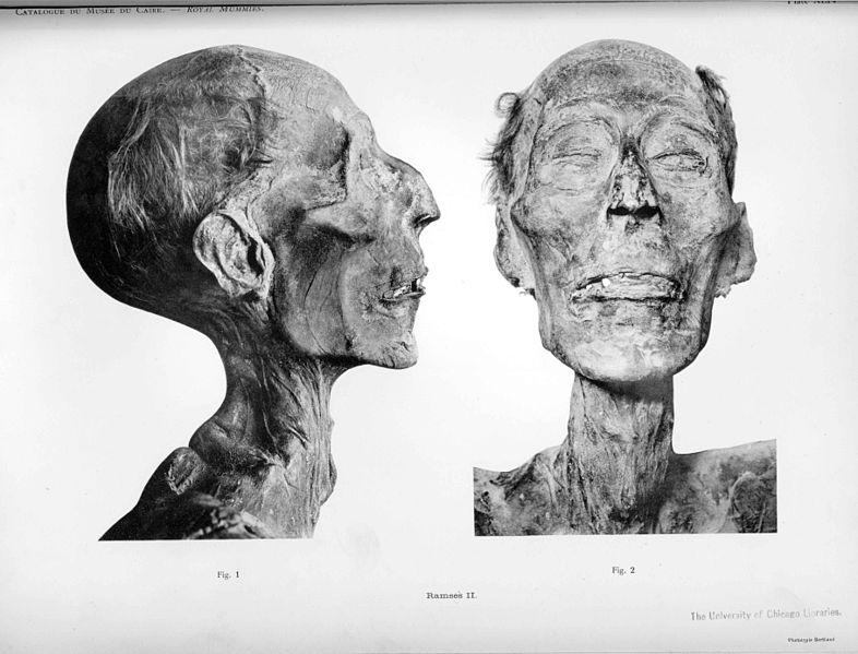 tutincommon: mumie Ramesse II
