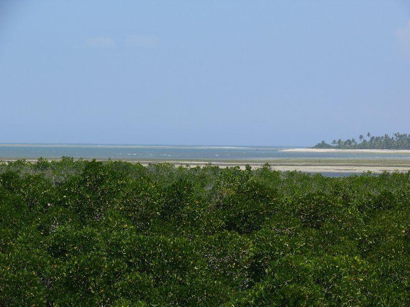 Tongoni - zátoka s mangrove (foto: Pavel Kohout, Tanzanie)