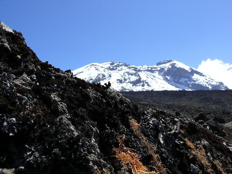 Lyšejníky na Shira Plateau, Kilimandžáro