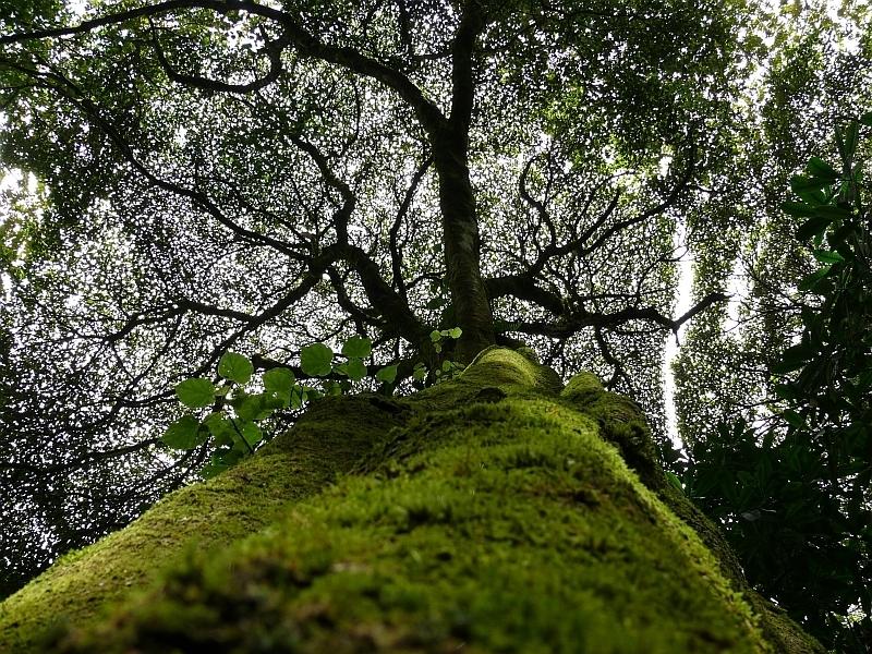 Prales na východní straně, Kilimandžáro