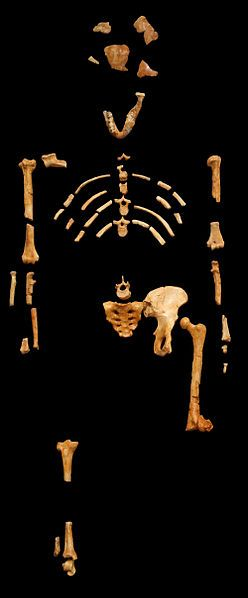 Lucy - australopithék