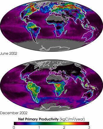 "Earth's carbon ""metabolism"" (NASA, 2002)"