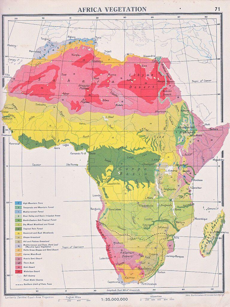 Vegetace Afriky