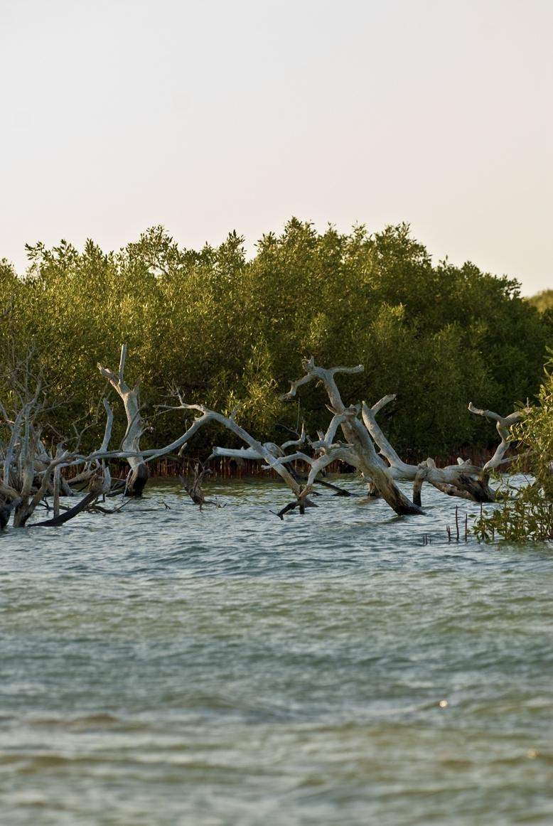 Mangrovový les v Egyptě (Dario Trimarchi, Al_Bahr_al_Ahma