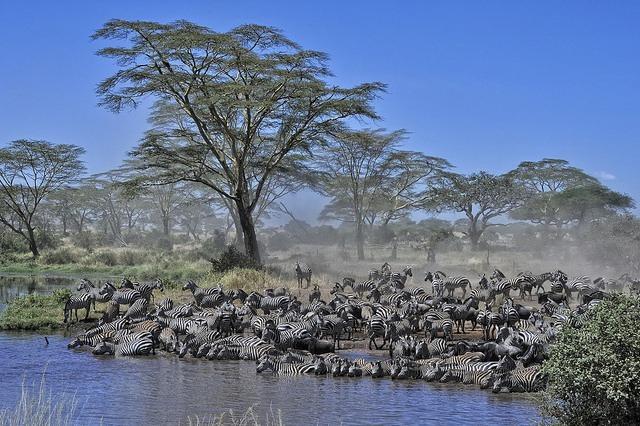 Diana Robinson: Serengeti