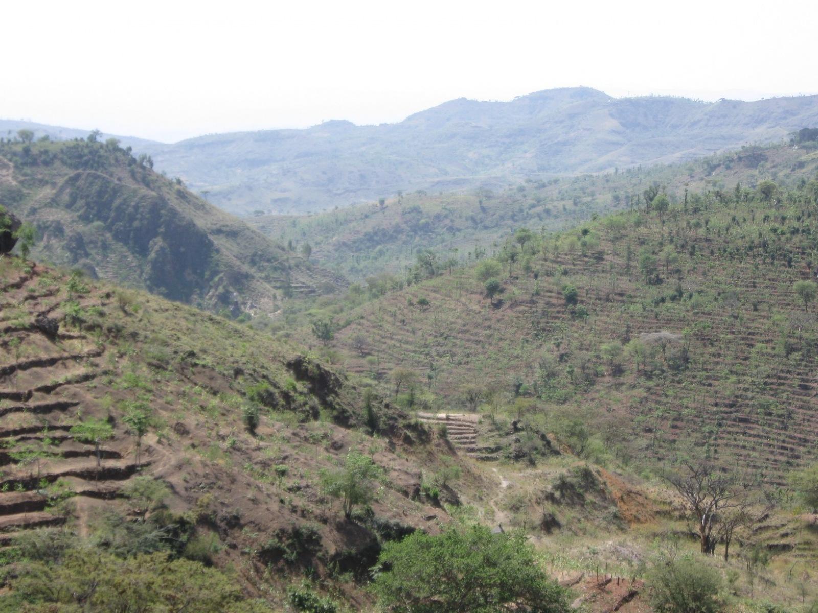 Krajina Konso, Etiopie  (autor: Trees for the Future)