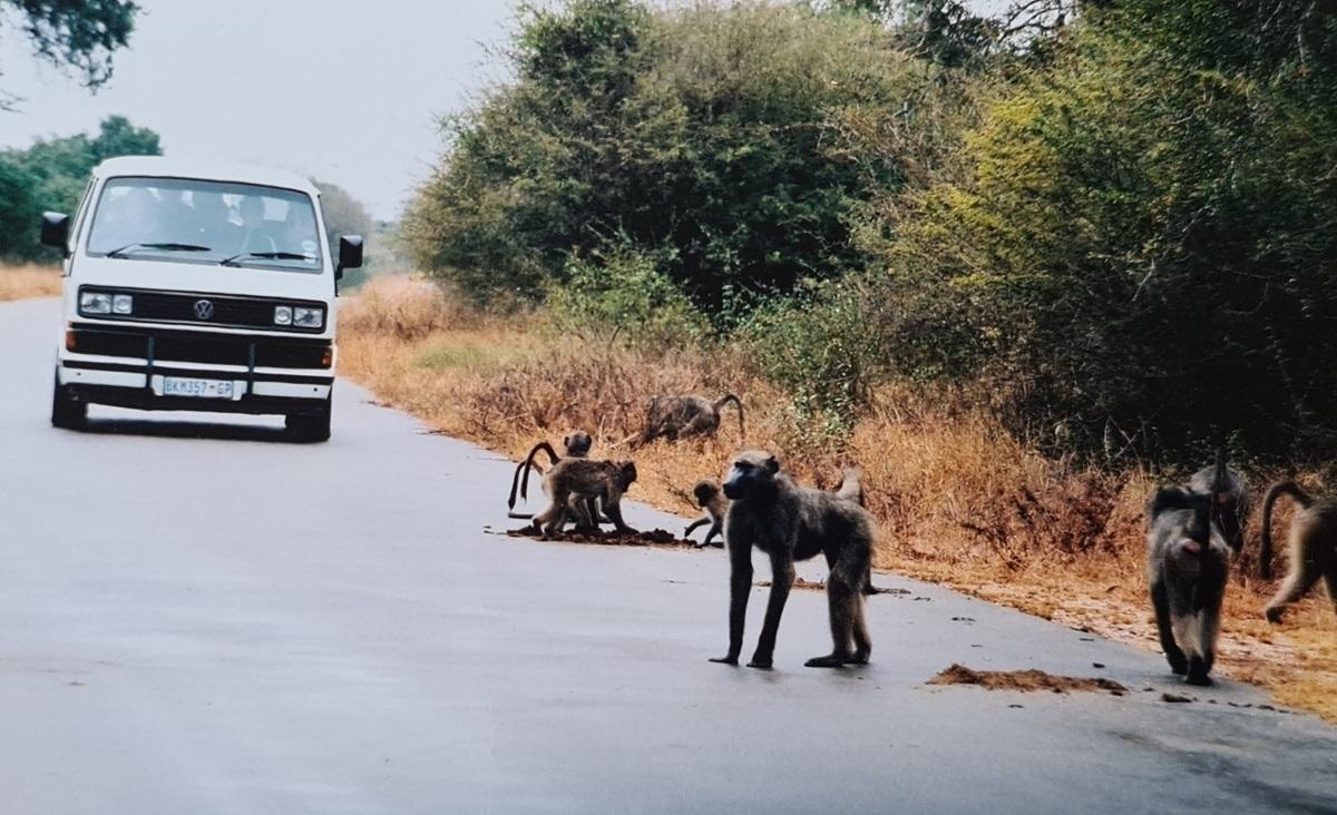 Kruger National Park - zvířata mají přednost