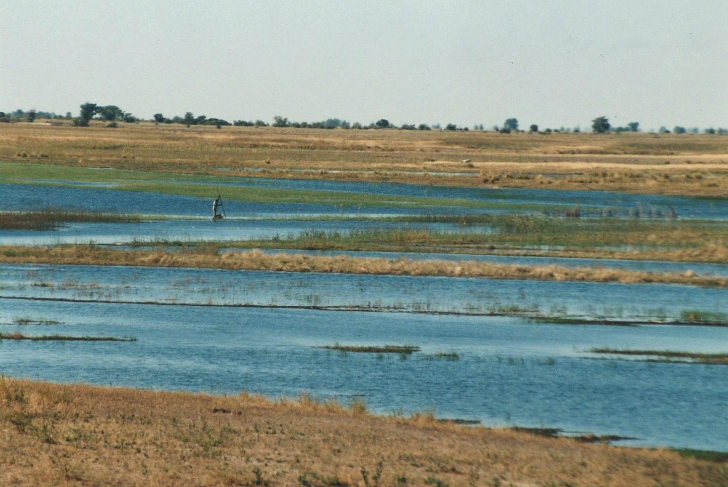 Niva řeky Kwando Chobe