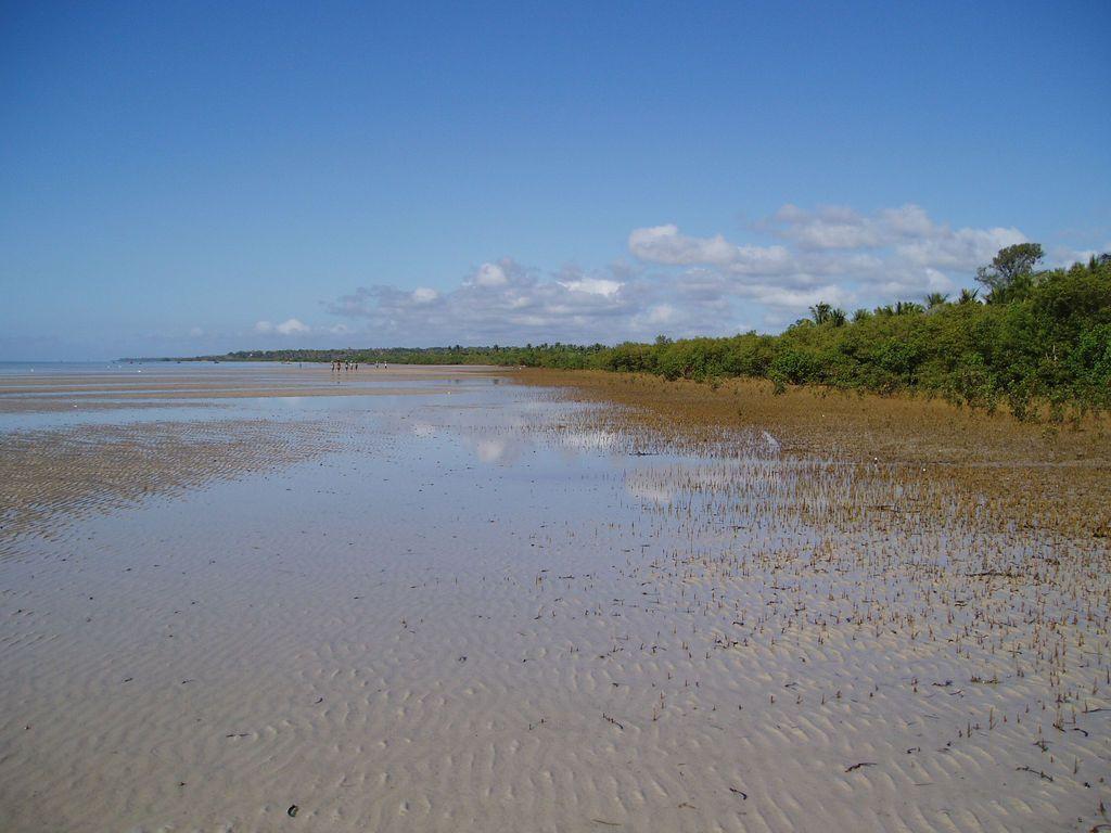 Mangrovový les v Mosambiku