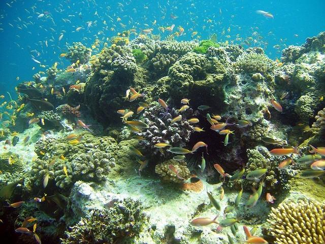 Paul Britton: Potápění na ostrově Pemba