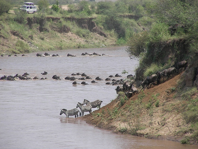 Velká migrace v N.P. Maasai Mara; Autor: joxeankoret