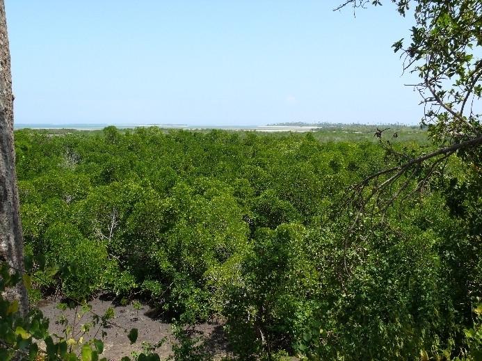 Mangrovový les v Tanzanii