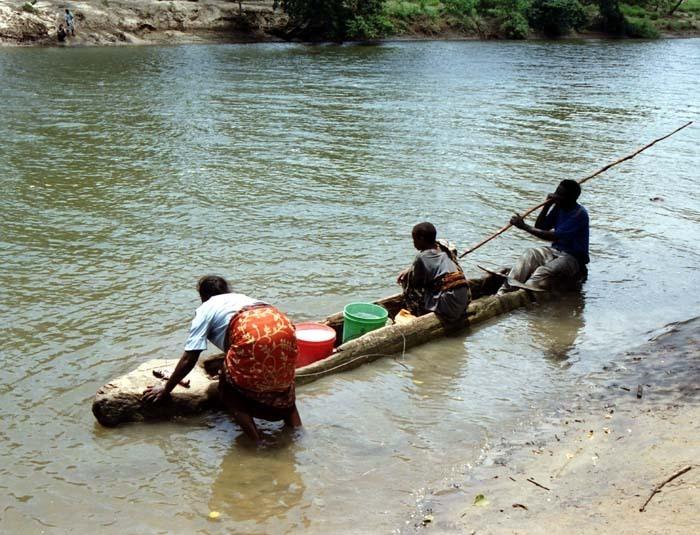 Přeprava mízi z kokosovníku (Cocos nucifera) přes řeku Sigi, Amboni, Tanga
