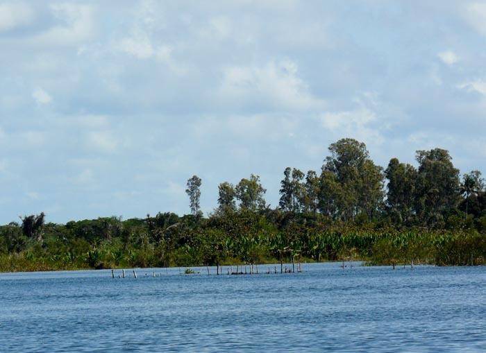 Deštný prales v Vohibola Reserve, Madagaskar