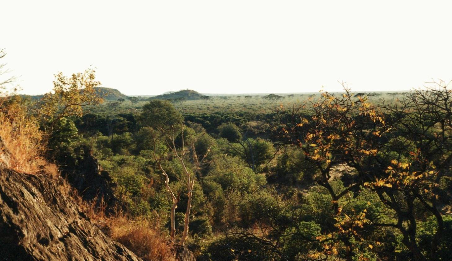 Mopanové lesy (N.P. Chobe), Botswana