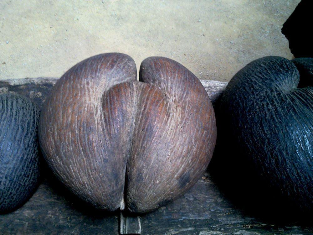 Reed Wiedower: plod palmy loidoicey