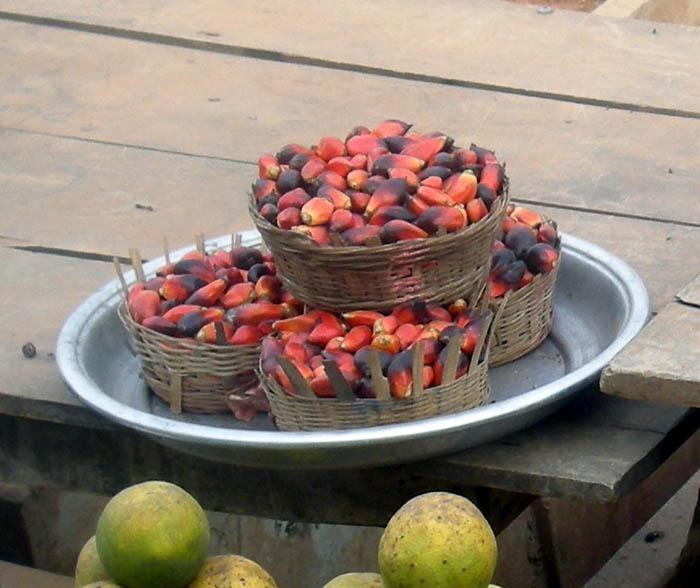 Palma olejná (Elaeis guineensis) - plod
