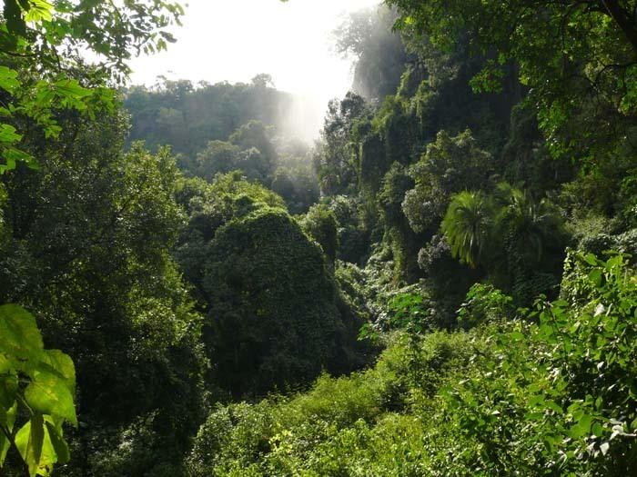 Prales pod Victoriinými vodopády