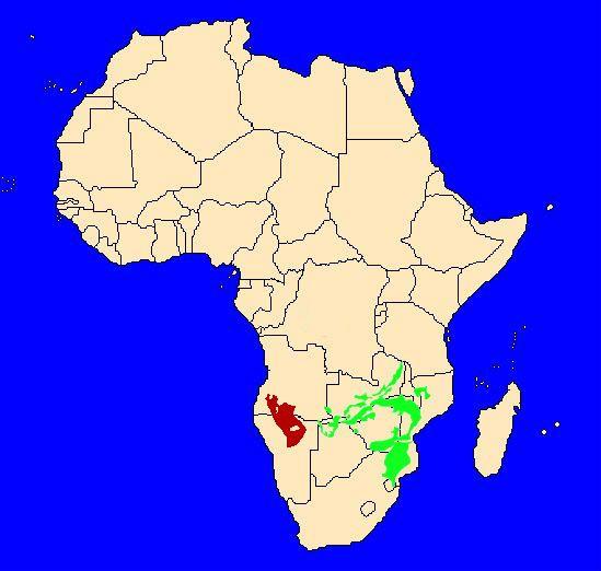 Mapa rozšížení mopanových lesů