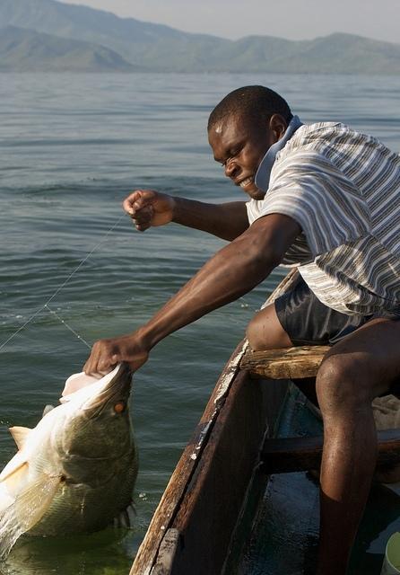Úlovek nilského okouna na Viktoriině jezeře (Autor: WorldFish - Flickr.com)