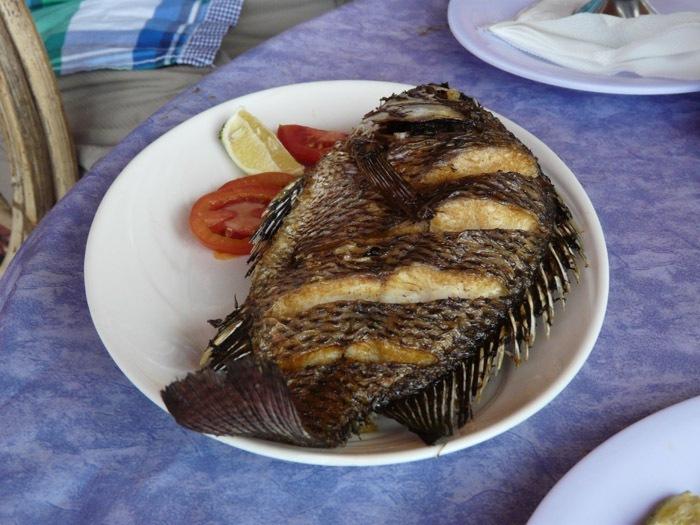 Tilapie nilská (Oreochromis niloticus)