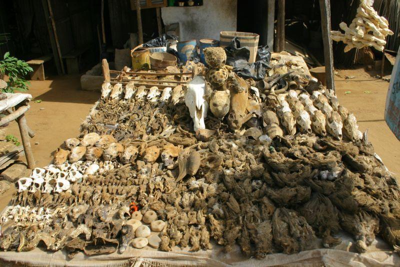 Fetish market Abomey (Benin)