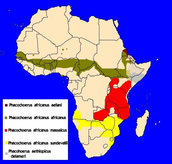 Mapa rozšíření rodu Phacochoerinae