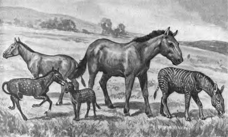 Vyhynulí koňovití - Extinct horses, Autor: Heinrich Harder