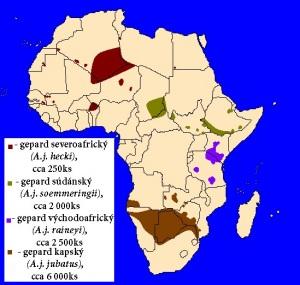 Gepard štíhlý (Acinonyx jubatus) - rozšíření