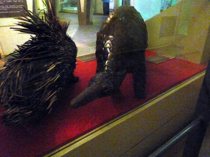 Luskoun velký (Manis gigantea) v Národním muzeu v Nairobi