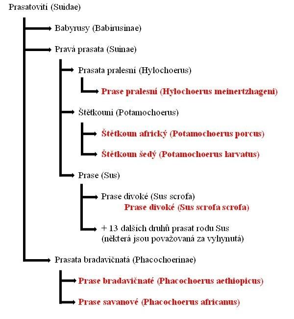 Systematika (taxonimie) prasat