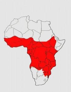 mapa výskytu Civettictis civetta