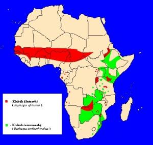 Klubák (Buphagus) - rozšíření