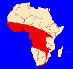mapka výskytu kobry černé