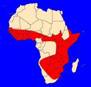 mapka výskytu mamby černé