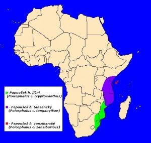 mapka výskytu papouška hnědohlavého