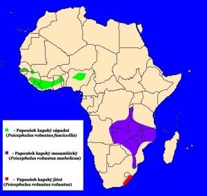 mapka výskytu papouška kapského
