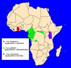 mapka výskytu papouška konžského