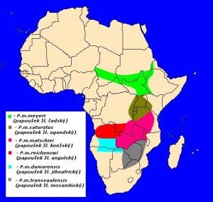 mapka výskytu papouška žlutotemenného