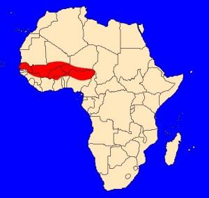 výskyt kobry senegalské