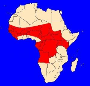 mapka výskytu zmije nosorohé